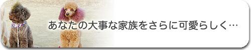 banner_21.jpg
